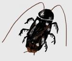 ゴキブリは幼虫の間に駆除しないと大変な事に!その理由が恐ろしい・・・