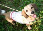 犬を飼う時に準備する物(初期費用)!1ヶ月の餌代はどのくらい?