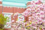 造幣局桜の通り抜けのアクセス方法!電車・バス・車での行き方
