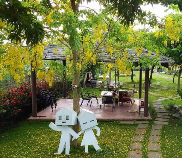 桂田莊園環境清幽,在阿勃勒開花之季,形成一大片的黃色地毯。
