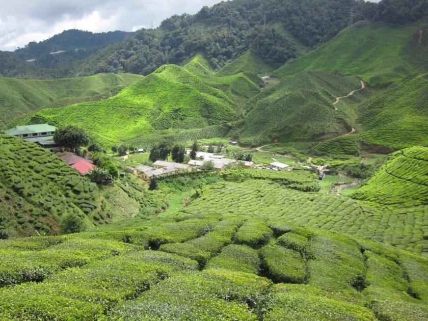宜人的氣候使金馬倫高原成了馬拉西亞熱門的避暑聖地,在很早以前這裡是馬來西亞原住民生活的範圍。