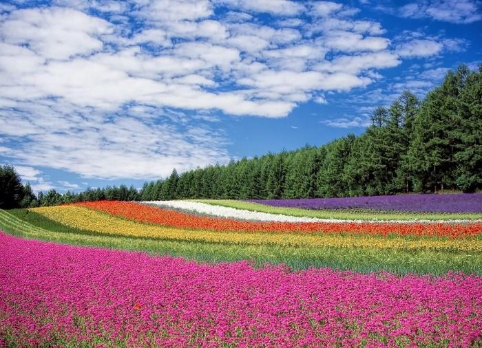 flower_garden_blue_sky_hokkaid