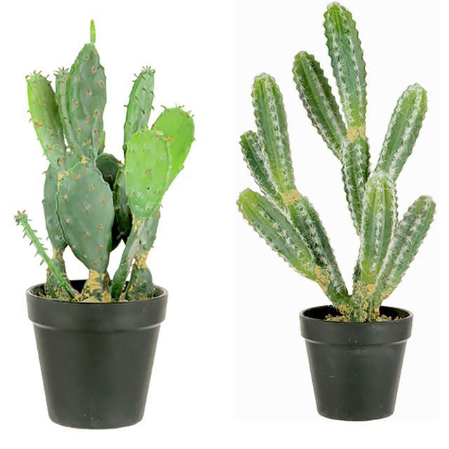 Cactus Leaf Drop Christmas
