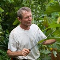 Ernst Götsch, o brasileiro da agrofloresta que o Brasil desconhece