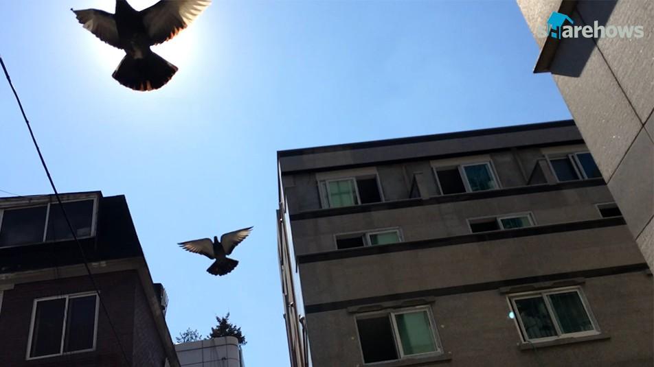 비둘기를 쉽게 쫓는 방법