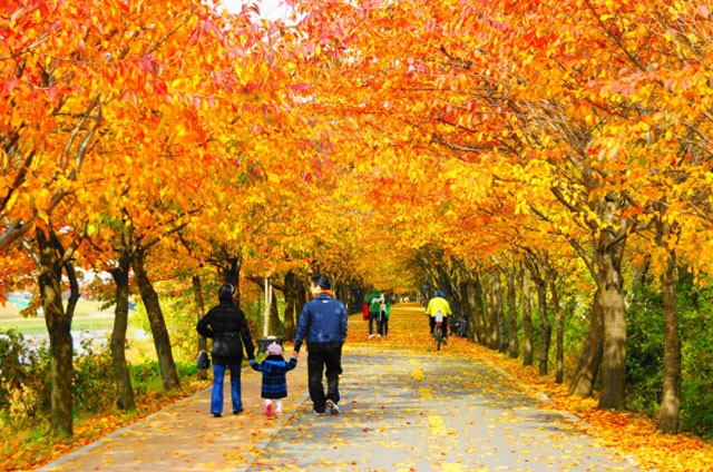 beatiful-fall-foliage-spot-in-seoul 02