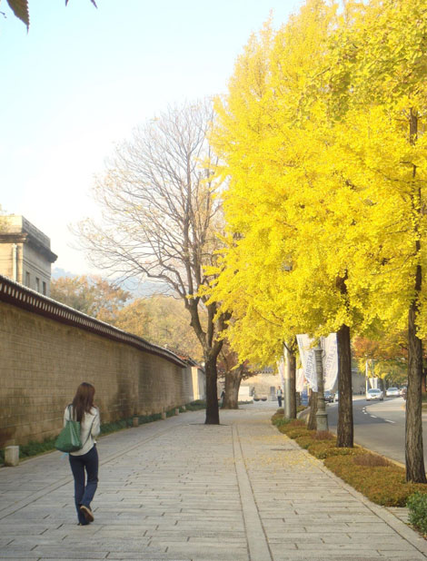beatiful-fall-foliage-spot-in-seoul 03