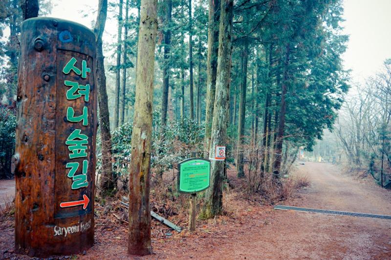 forest walking 03