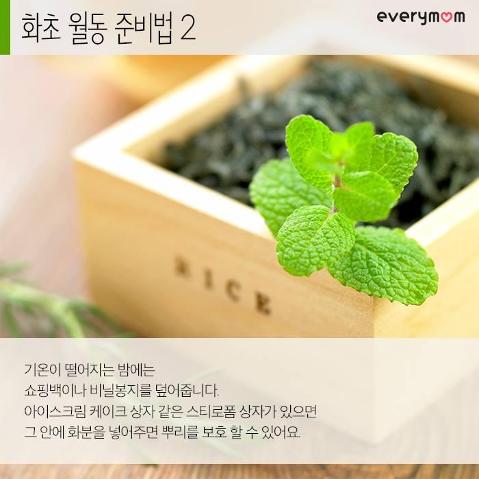 flowering plant 05
