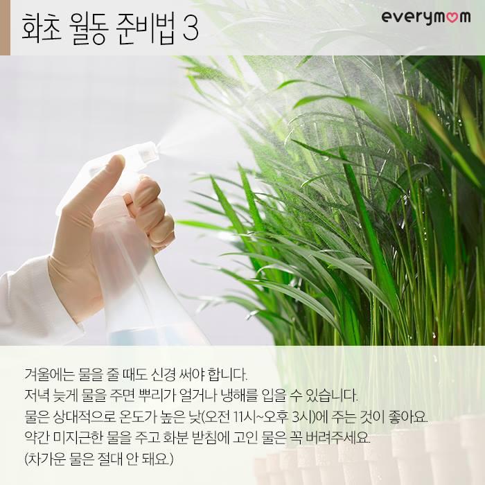 flowering plant 06