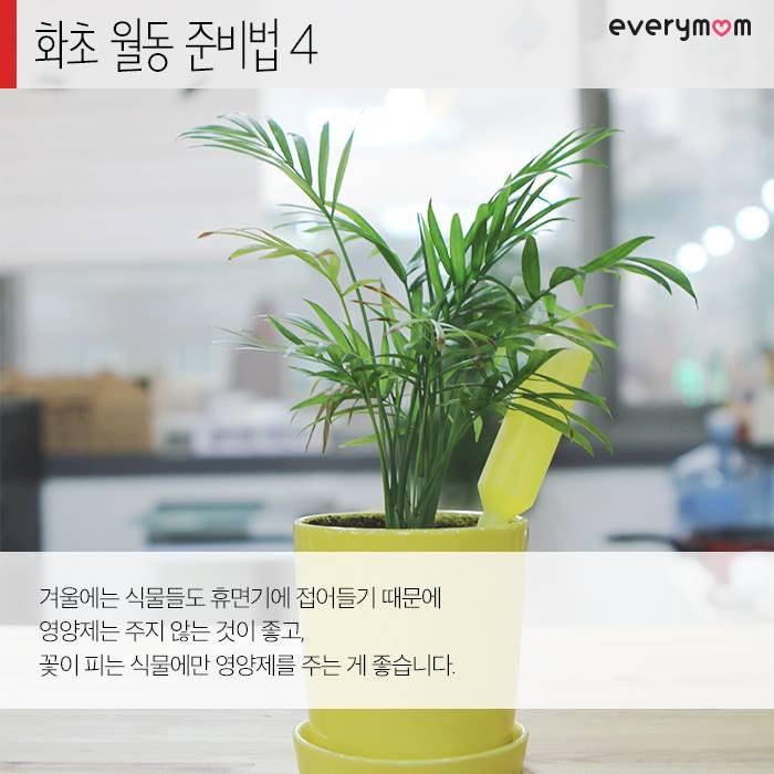 flowering plant 07