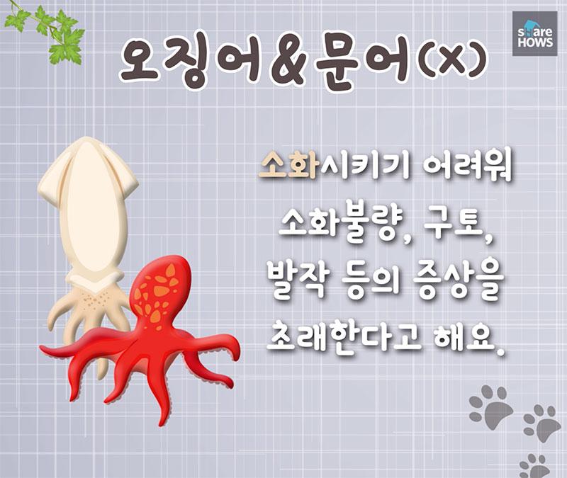 dog food 10