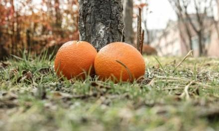 [과일 칼럼] 카라카라 오렌지