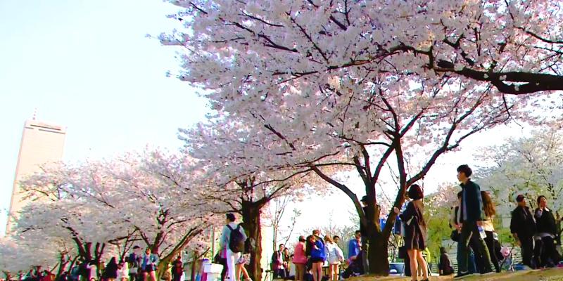 [#5]서울 봄나들이 가기 좋은 곳 5가지!