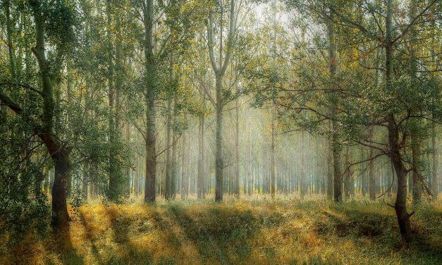 가을에 걷기 좋은 숲길