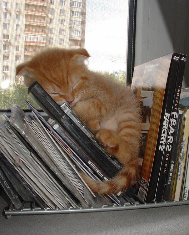 cute-sleeping-animals-68__605