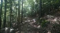 Nice shady path