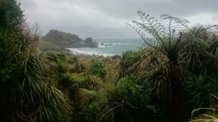 Martins bay, West Coast NZ