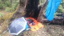 Hollow log camp