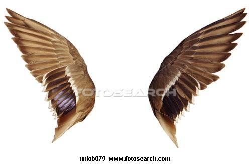Folded Bird Wing Anatomy Best Bird Colletion 2018