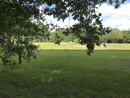 Northwood Golf Course is part of the circular walk