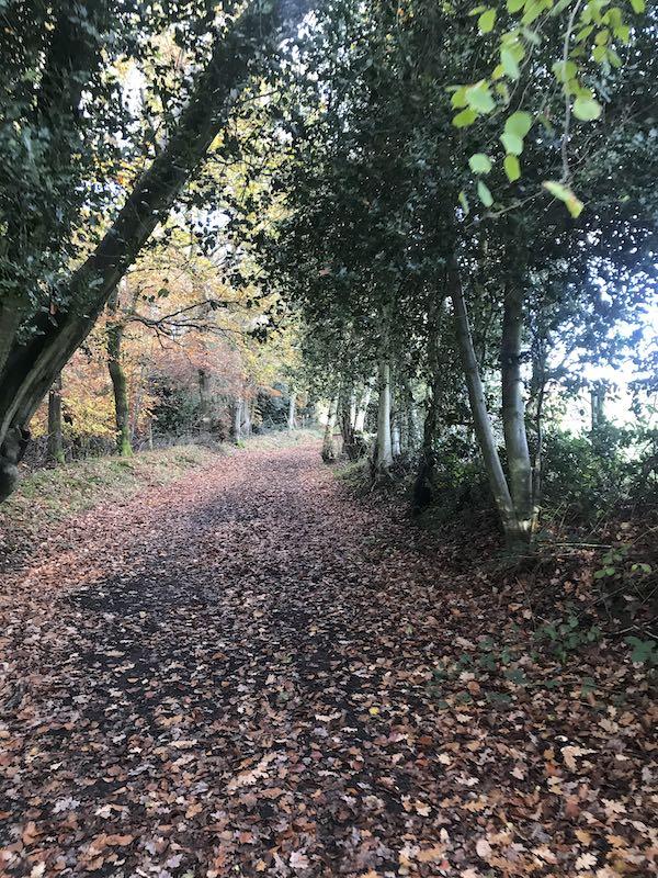 Path through Brockhurst Wood
