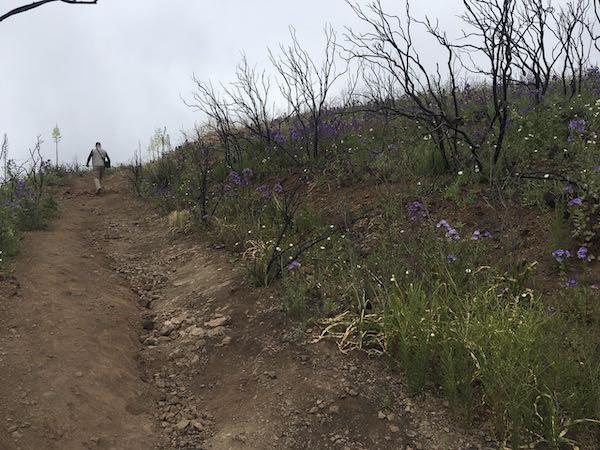 Fire ravaged on the Mishe Mokwa regeneration trail