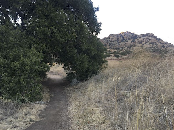 Oak tree shelter on the Old Stagecoach Trail