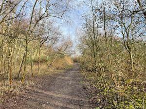 Rickmansworth Loop Walk- river, canal, woods & moor