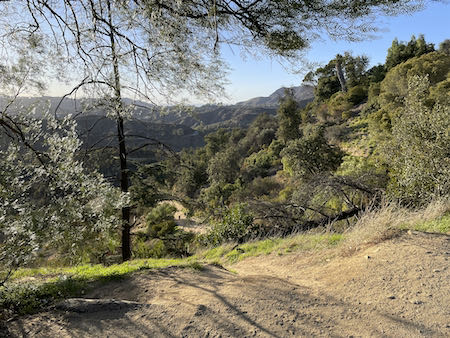 A lovely view down the Ferndell to Griffith Park path