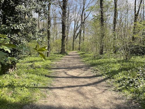 Binghams wood on the Watford to Aldenham Country loop