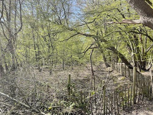 Adder sanctuary on the Ruislip den of spies walk