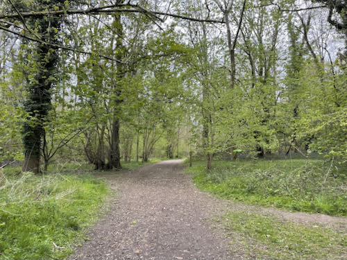 Harrocks Wood on the Rickmansworth to Whippendell loop walk