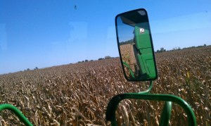 Combine monster eating the field