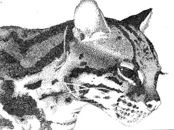 Gambar Pointilis Hewan