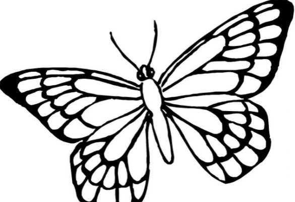 Gambar Sketsa Kupu-kupu Terbang