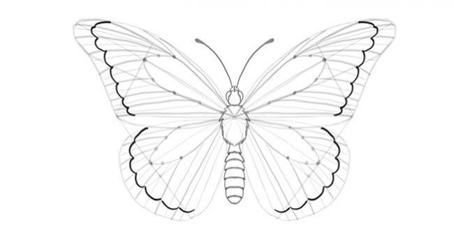 1001 Keindahan Sketsa Gambar Kupu Kupu Terelengkap Dan Tekniknya