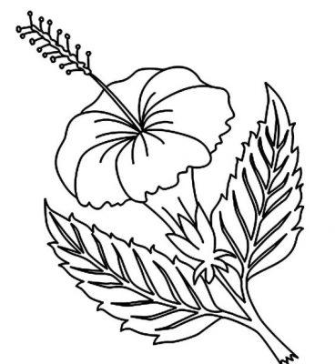 1001 Keindahan Sketsa Gambar Bunga Terlengkap Dan Cara Membuatny