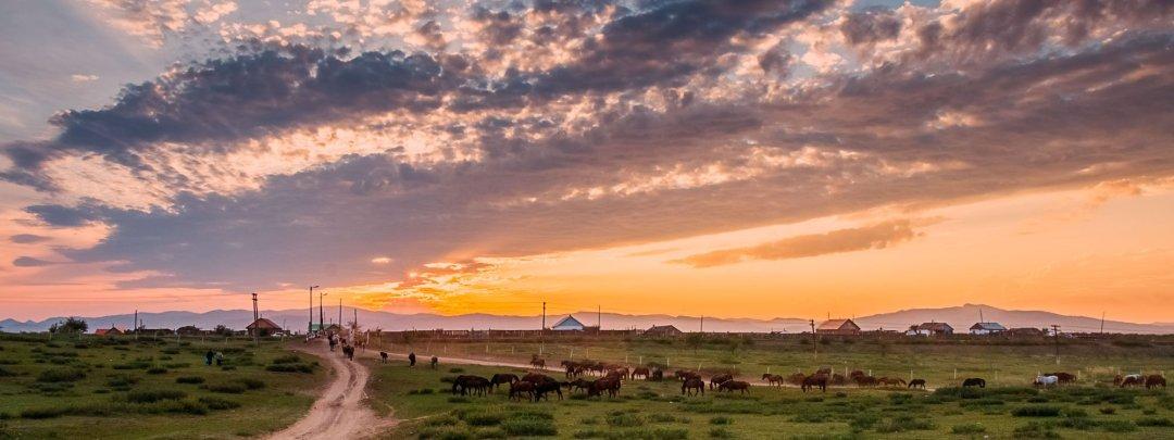 Nomads herd wild horses in Sukbaatar, Mongolia