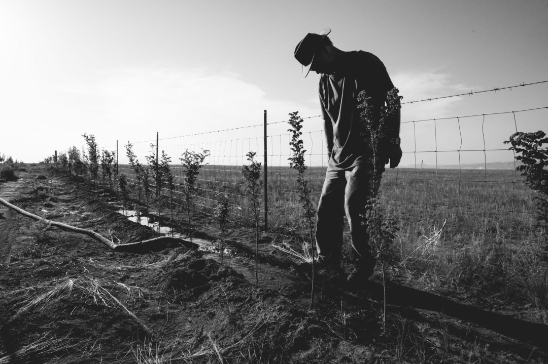 watering fruit trees on the mongolian border