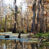 The Swamp on the Bayou