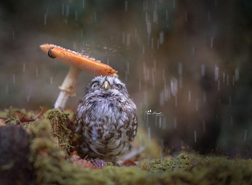owl-and-mushrooms-tanja-brandt-1__880