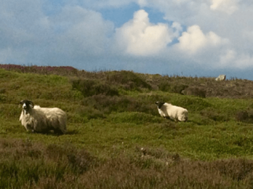 Life On the Moors