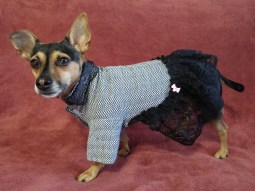 Pawfect by Coco business black dress