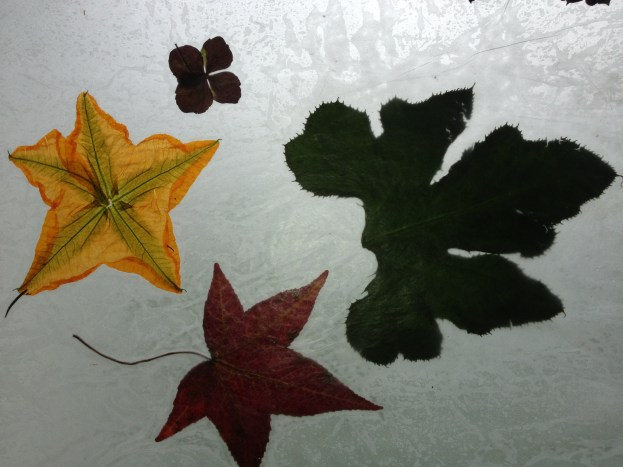 Stained glass dried leaf & blossom art- Pick fall colored leaves and flowers, place between two pieces of wax paper and press with hot iron until sealed all the way around and inbetween