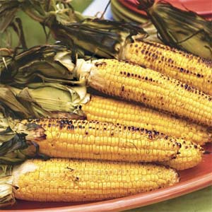 grilled-corn-sl-1218736-x