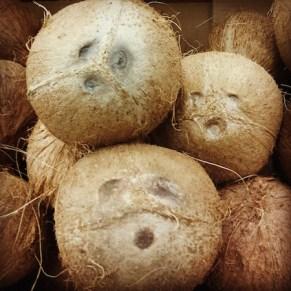 coconut holes