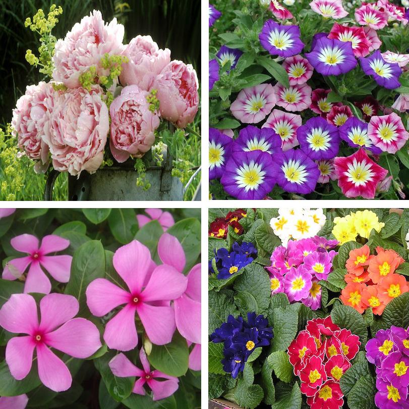 P flowers