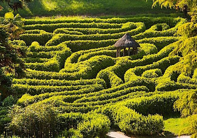 Glendurgan Maze Cornwall