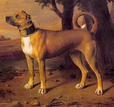 Dogs Essential for a Regency Era Hunter
